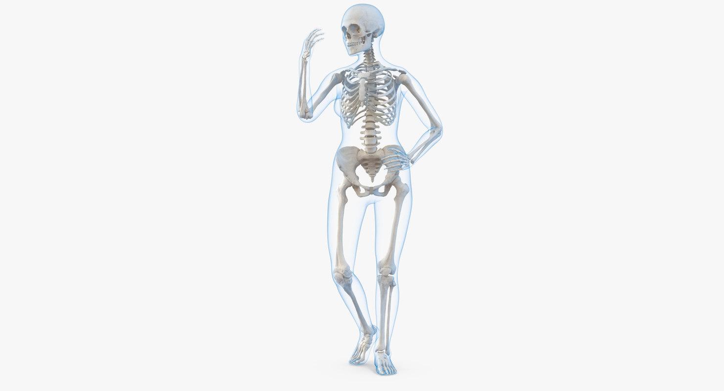 female body skeleton rigged 3D