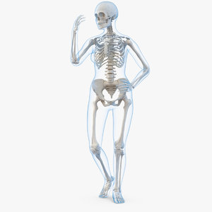 female body skeleton rigged 3D