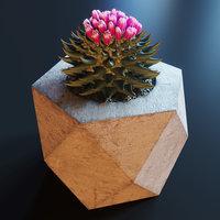 3D ariocarpus cactus model