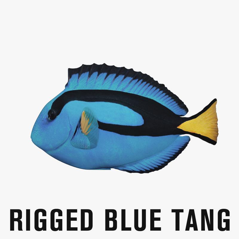 blue tang rigged fish 3D model