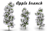 3D flowering apple tree branch model
