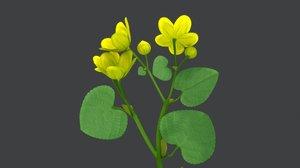 polypetalae plants model