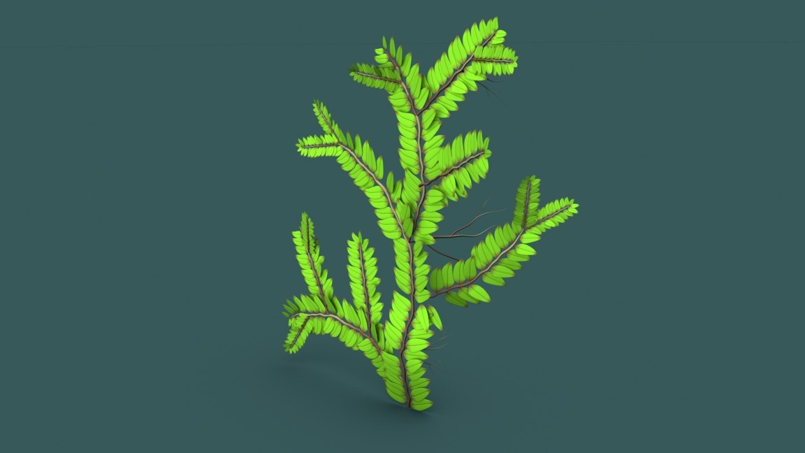 selaginella plants 3D