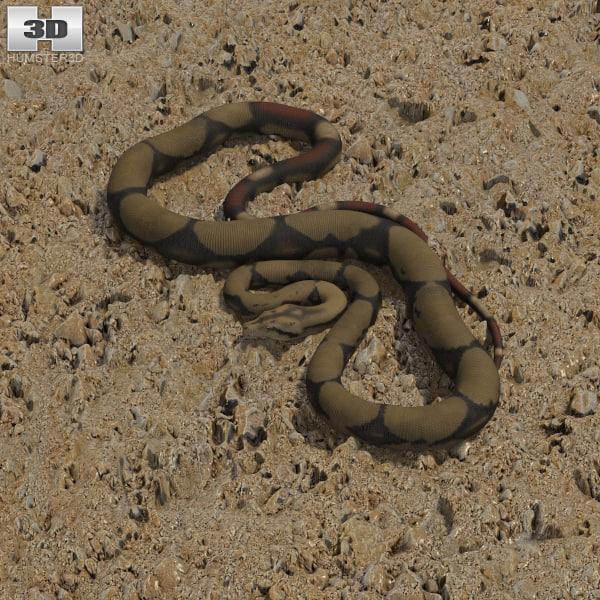 constrictor boa model