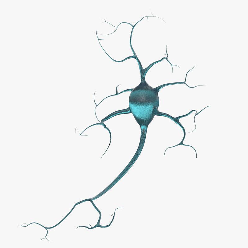neurons 3D model