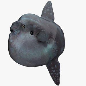 3D giant ocean sunfish