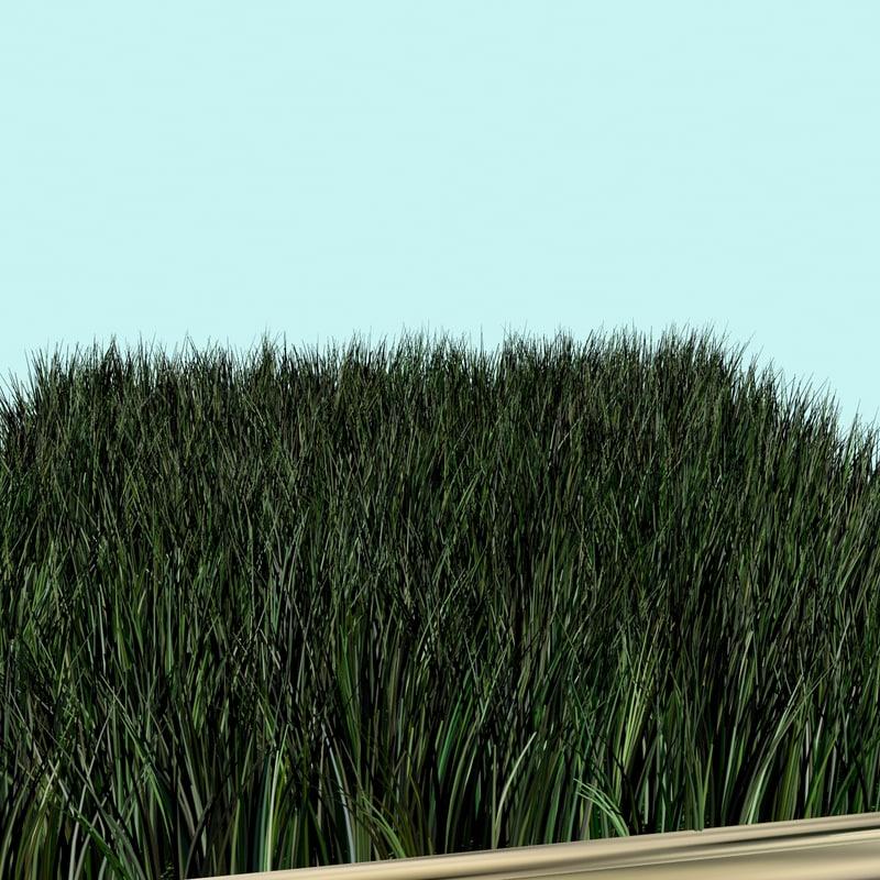 3D model grass flower