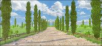Cipres Path Landscape