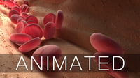 blood cells animation 3D model