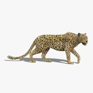 leopard fur rigged model