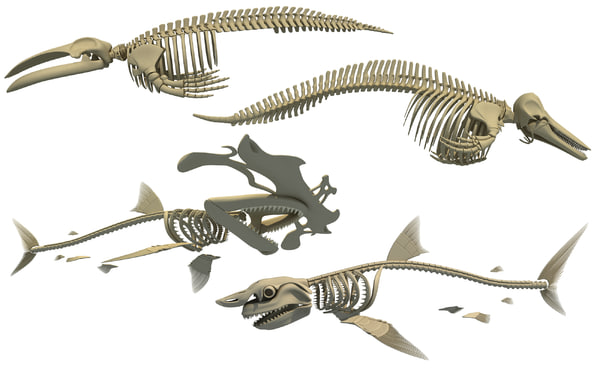 skeleton whale shark dolphin 3D
