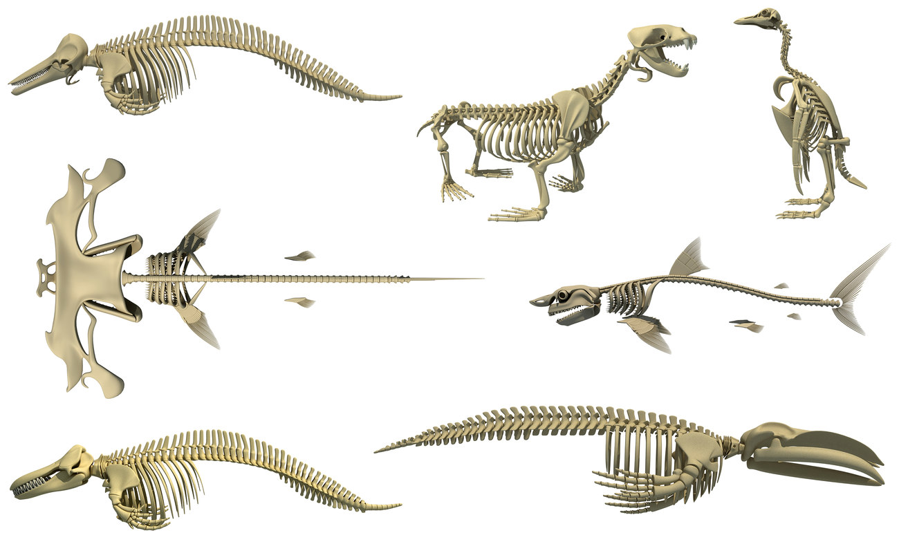 aquatic skeletons model