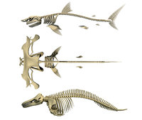 3D model sharks skeleton