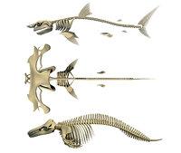 3D model sharks skeleton