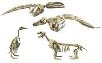 aquatic skeleton 3D