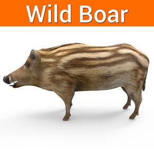 wild boar 3D