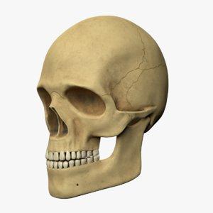 skull asset unity 3D model