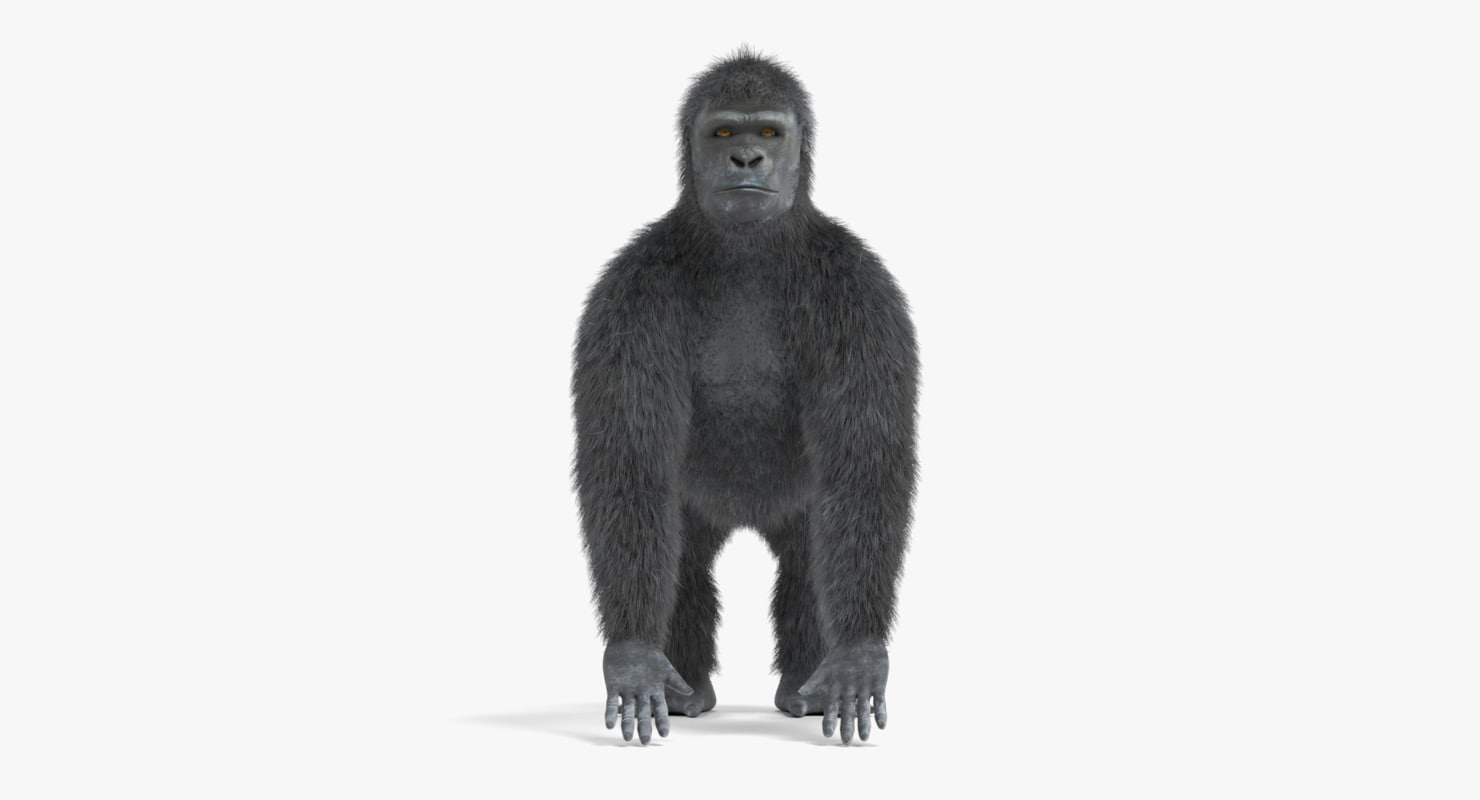 western gorilla model