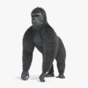 3D western gorilla rigged