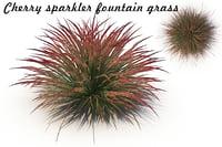 cherry sparkler fountain grass 3D