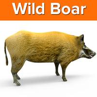 3D wild boar