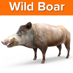 wild boar ready 3D model