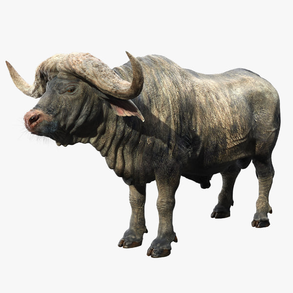 cape buffalo fur 3D model