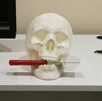 insan kafatasi 3D