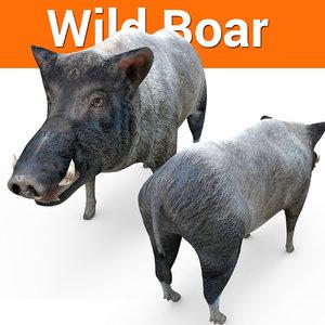 wild boar model
