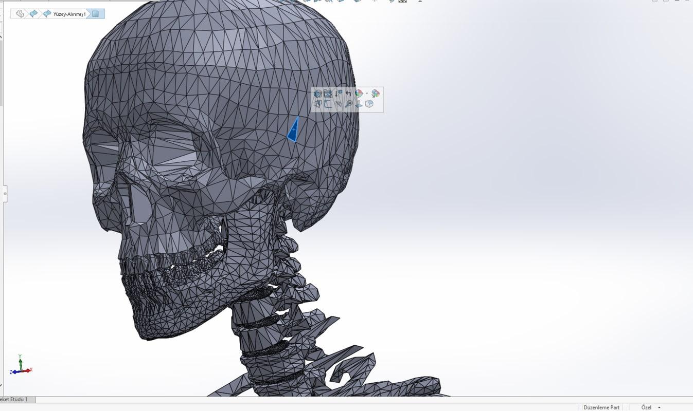 3D model insan iskeleti