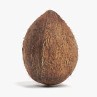 3D coconut coco nut