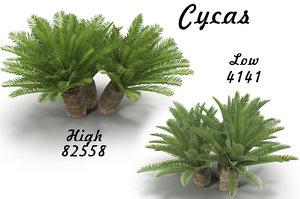 cycas 3D