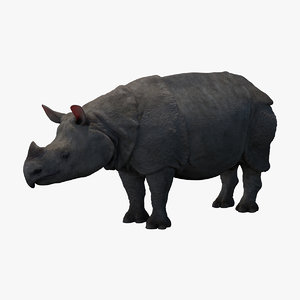 3D javan rhinoceros rhino model