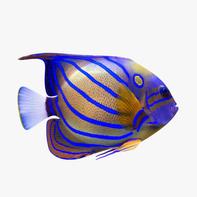 3D model angelfish