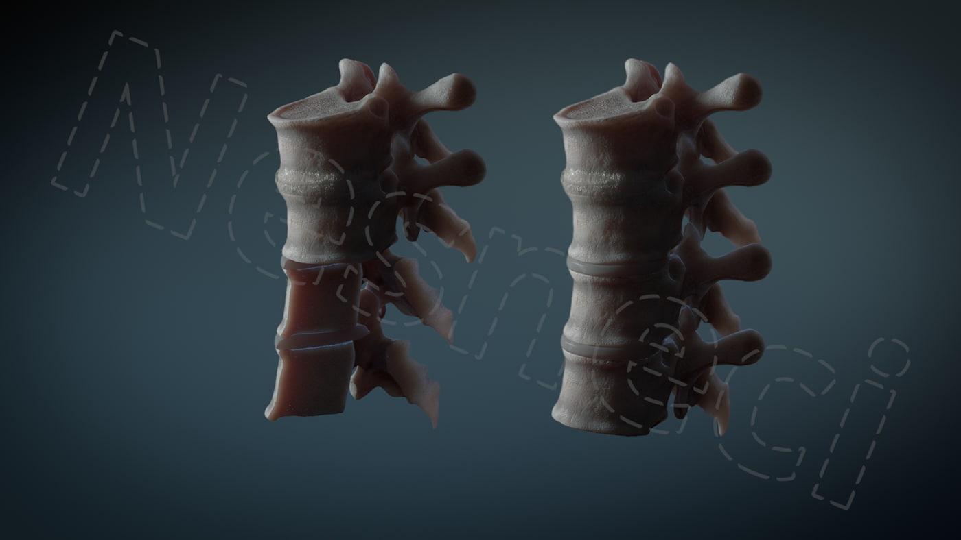 3D human vertebrae t6 cross section