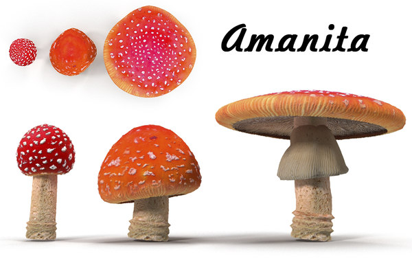 amanita pbr 3D model