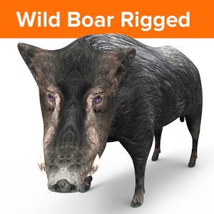 wild boar rigged 3D model