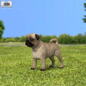 pug puppy 3D model