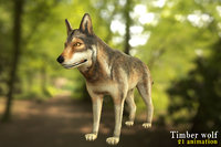 Timber wolf character