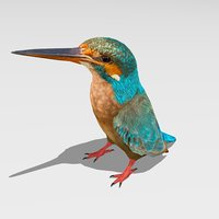 3D common kingfisher