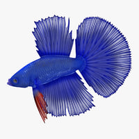 blue betta fish 3D model