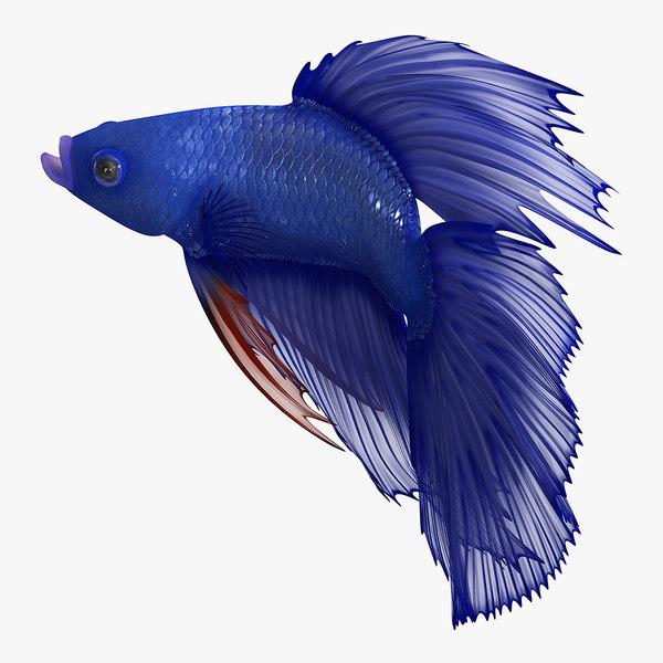 3D blue betta fish rigged