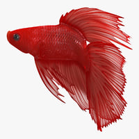 Red Crowntail Betta Fish Rigged