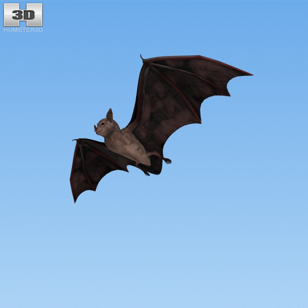 3D model common bat
