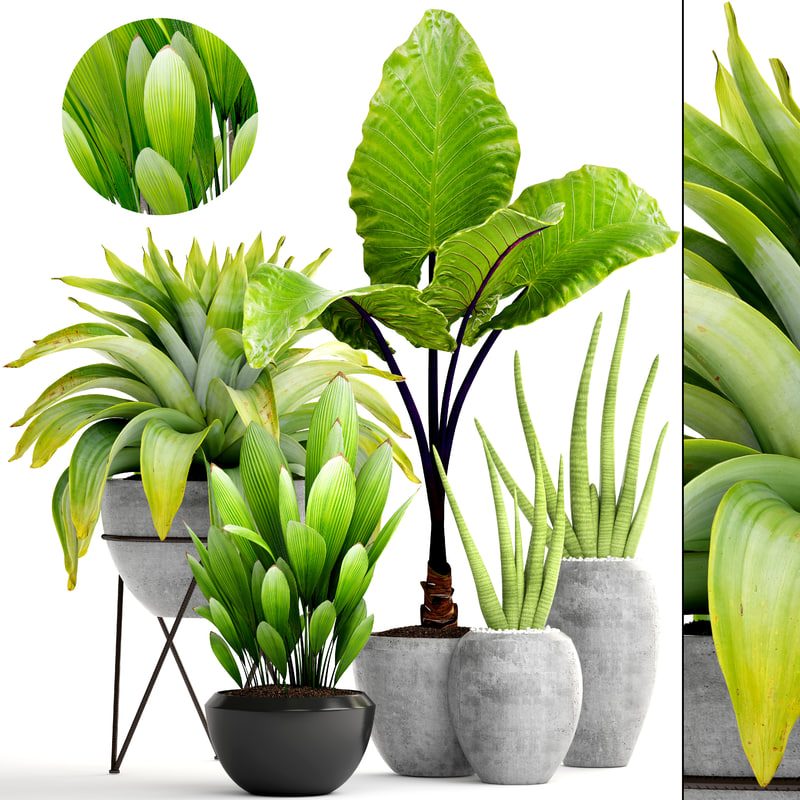 tropical plants model