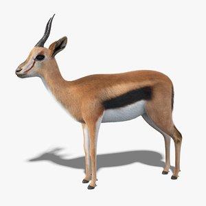 gazelle fur 3D model