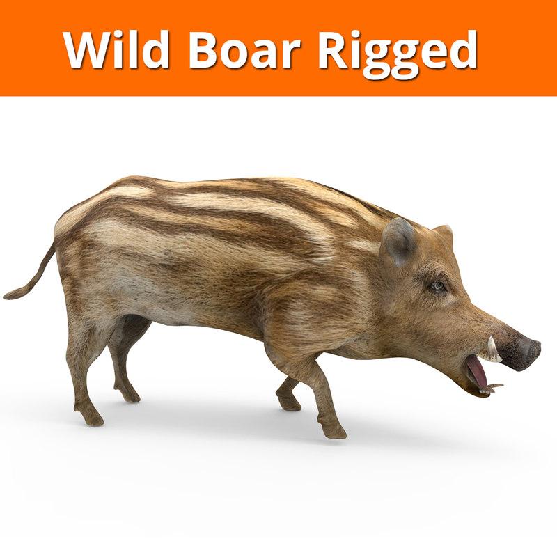 wild boar rigged 3D