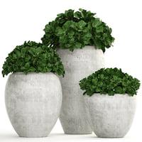 3D model plants pots