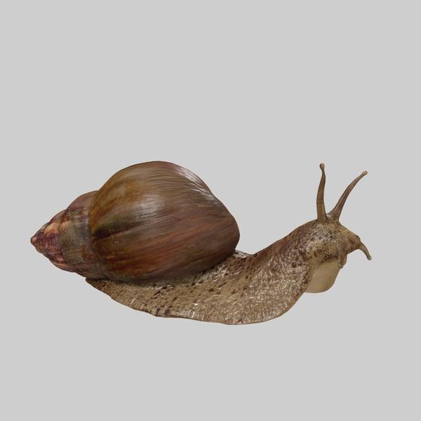 snail 3D model