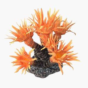 sun coral model